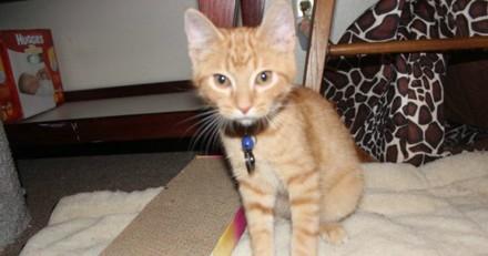 Ce chaton n'arrêtait pas de miauler, mais il avait une très bonne raison de le faire
