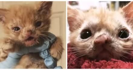 Ce chaton a été jeté dehors pour une raison qui va vous révolter
