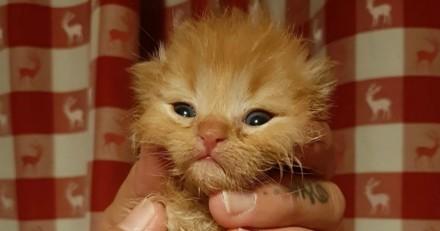 Ils trouvent un chaton qui hurle : en examinant ses pattes, ils réalisent combien l'homme peut être cruel