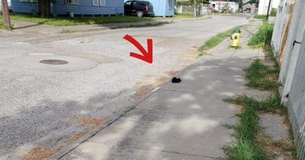 La factrice voit quelque chose au milieu de la rue, s'approche et panique