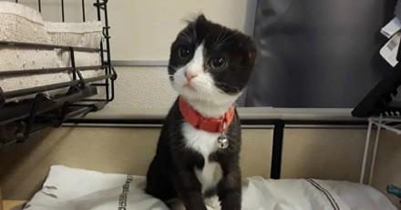 Elle croise un chaton qui n'a pas d'oreilles et décide de lui en offrir !