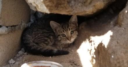 Ils sauvent un chaton qu'il faut l'euthanasier : quelqu'un ouvre la porte et fait une annonce choc