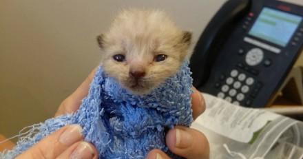 Trouvé dans une station-service, ce minuscule chaton est devenu incroyable grand
