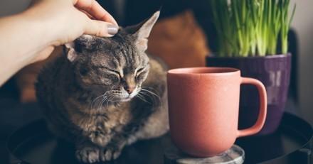 3 conseils pour apaiser un chaton stressé