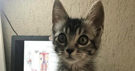 Elle donne 2 jours à sa fille pour trouver un foyer à un chat abandonné, mais réalise vite son erreur