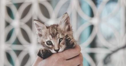 Une dame entre dans la SPA et craque sur un chaton : ce qu'elle fait rend tout le monde furieux