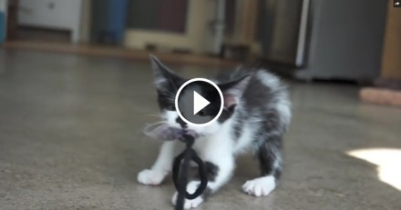 En pleine crise identitaire, ce chat se prend pour un chien ! (Vidéo du jour)