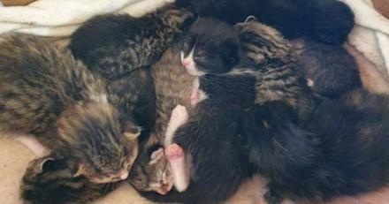 9 chatons abandonnés : une fois chez le vétérinaire, leur tragique secret est révélé !