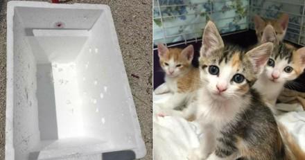 5 chatons enfermés dans une boîte, jetés devant les portes d'un refuge en plein soleil