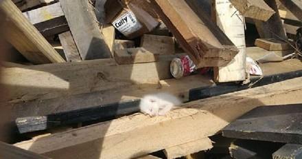 Petits cris dans une benne à ordures : il se penche pour regarder dedans et se met à trembler
