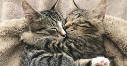 Ils arrivent au refuge pour adopter un adorable chat, mais rien ne se passe comme prévu...