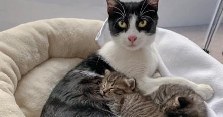 Cette chatte a installé sa petite famille dans une cave pour leur trouver de l'aide