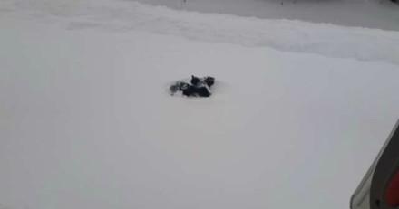 Au milieu d'une tempête de neige, il croit voir un vêtement sur la route et pousse un cri en découvrant la vérité