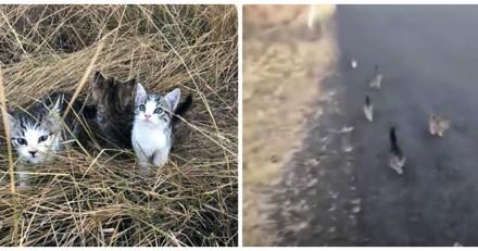 Elle promène son chien et 10 chatons commencent à la suivre, quand elle comprend pourquoi elle est dégoûtée