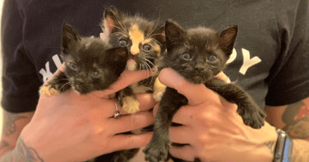Ils trouvent 2 chatons dans un carton, quelques minutes plus tard ils font une autre découverte bouleversante