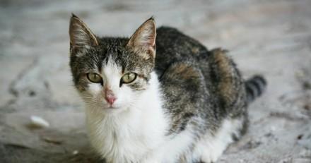 Maison de l'horreur : la présidente d'une association de défense des animaux jugée pour cruauté sur des chats !