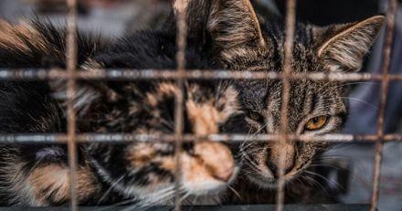Covid-19 : au Pakistan, les chiens et chats victimes de maltraitance et cruauté