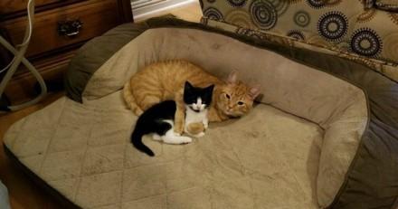 Ils cherchaient une maison pour un chaton errant, mais leur chat en a décidé autrement