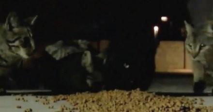A 64 ans, il donne à manger aux chats errants depuis 13 ans : ses voisins le dénoncent et il risque la prison