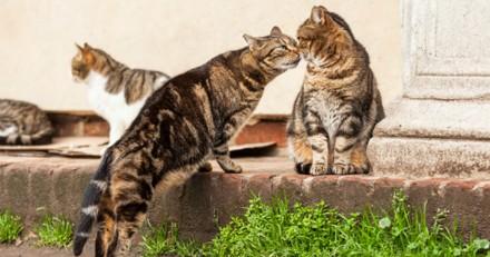 La police de cette ville a secrètement tué par balles de nombreux chats errants