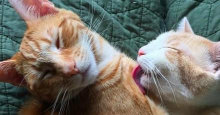 Elle installe un distributeur de croquettes pour ses chats, et explose de rire en voyant leur réaction