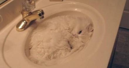 Les chats seraient-ils liquides ? L'étude étonnante qui va vous faire changer de regard sur les félins