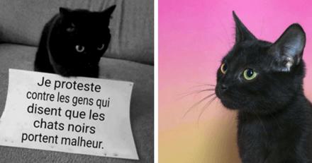 13 magnifiques raisons d'accueillir un chat noir dans votre vie