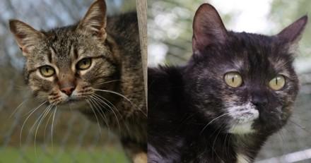 """Association Chats du Quercy : """"Un chat adopté vous rendra beaucoup plus que ce que vous lui avez donné"""""""