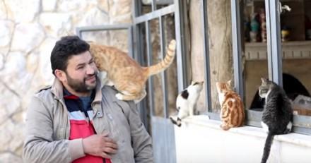 Il ouvre un refuge pour les chats victimes de la guerre en Syrie (Vidéo)