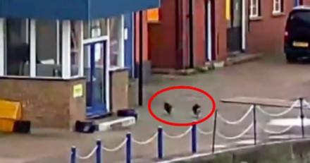 Il regarde 2 chats qui se courent après, ce qu'il voit ensuite lui glace le sang (Vidéo)