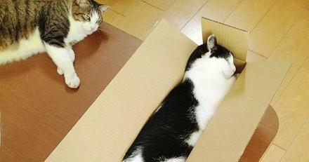 10 chats qui sont les rois de l'étirement