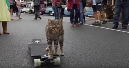 Ce petit chat a un talent particulier, il fait du skate comme personne ! (vidéo)