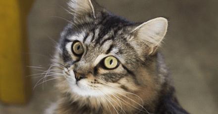 Elle perd sa chatte : 4 ans après, le matou est retrouvé dans un autre pays !