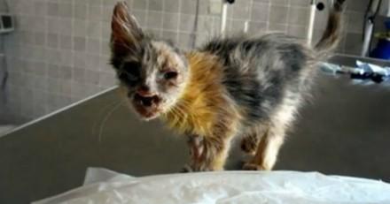 A 7 ans, elle sauve un chat que les adultes étaient trop terrifiés pour regarder (Vidéo)