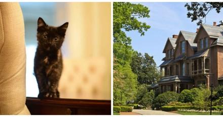 Ce chat errant a décidé de s'incruster dans une maison, la suite est assez incroyable