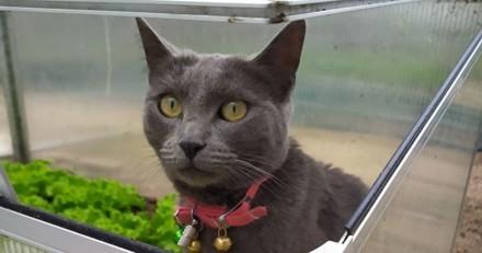 Un chat inconnu bondit sur ses genoux en plein trajet en voiture : il prend une décision cruelle