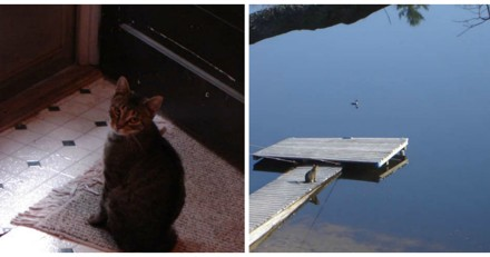 Il trouve une chatte devant chez lui et découvre son étonnante passion