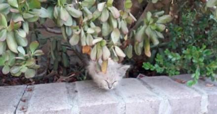 Elle sauve une chatte en très mauvais état, 5 mois plus tard tout le monde a une énorme surprise
