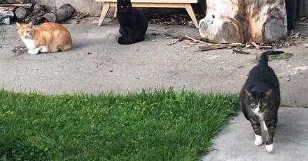 Ce chat est réfractaire au télétravail de ses maîtres : il reçoit une lettre du service RH le rappelant à l'ordre