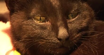 Dévastée après avoir perdu ses chatons, cette chatte pleure quand on lui confie un chaton abandonné (Vidéo)