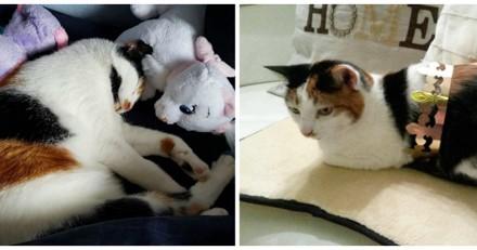 Elle emmène sa chatte chez le vétérinaire qui n'en revient pas et avoue être face au pire cas de sa carrière