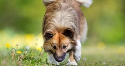 Alerte : les chenilles processionnaires sont de retour et elles sont dangereuses pour les animaux !