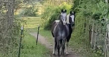 Au milieu du chemin, les chevaux stoppent net devant une forme qui les terrifie : il regarde et éclate de rire (vidéo)