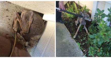 Elle trouve un chien affamé, le regarde de plus près et comprend qu'elle s'est trompée sur toute la ligne !