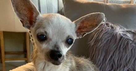 Un homme entre dans le cabinet vétérinaire : il commet la plus révoltante des trahisons