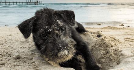 Que se passe-t-il si mon chien mange du sable ?