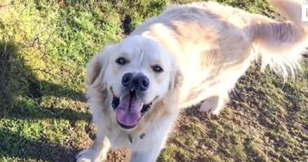 Ce chien a deux truffes et un énorme cœur ! (Vidéo)