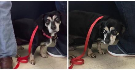 Il entre dans un refuge avec son chien, ce qu'il dit laisse tout le monde sous le choc (Vidéo)