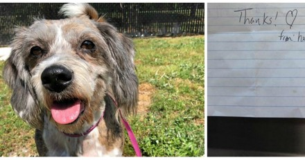 Elle trouve un chien abandonné sur sa pelouse avec un petit mot bouleversant