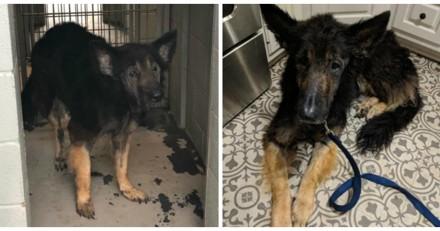 Ils entrent dans un refuge pour abandonner leur chien, ce qu'ils disent ensuite est encore plus choquant